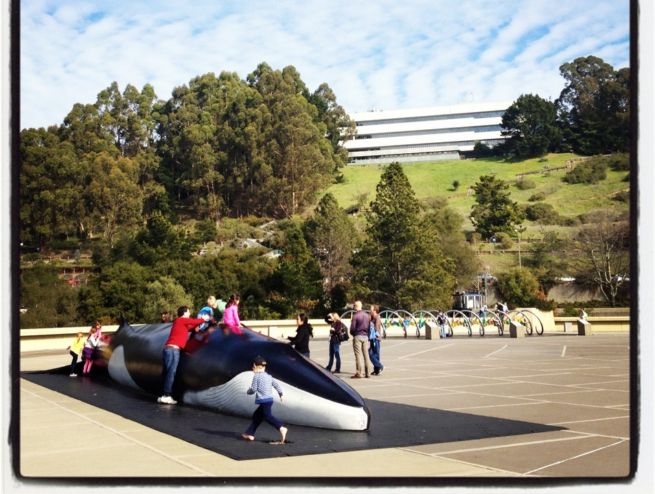 A Whale of a Good View in Berkeley Berkeley California United States
