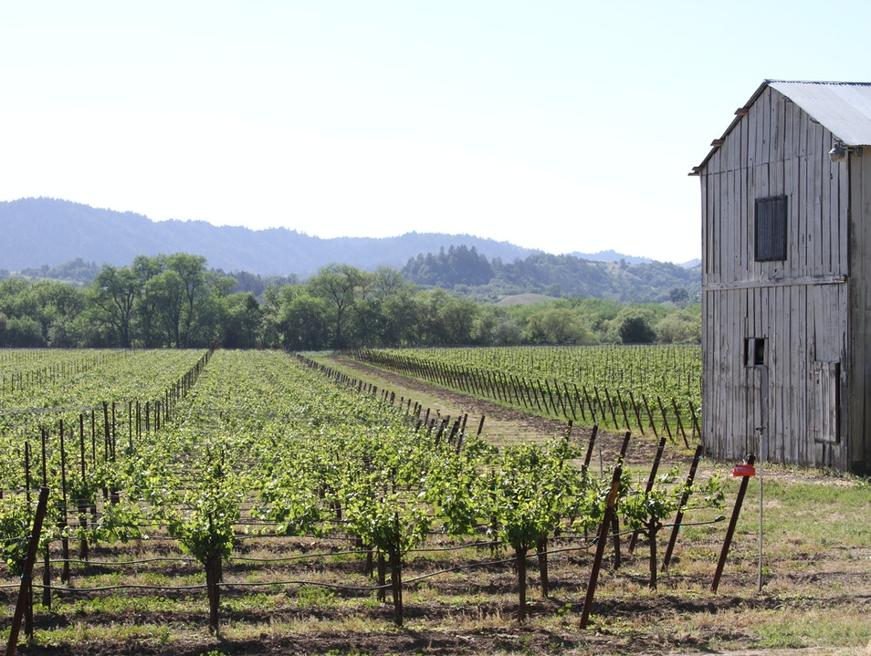 Remote Vineyard in Santa Rosa  Windsor California United States