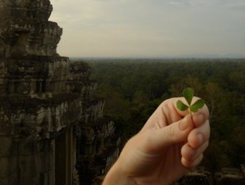 four leaf clovers Siem Reap  Cambodia