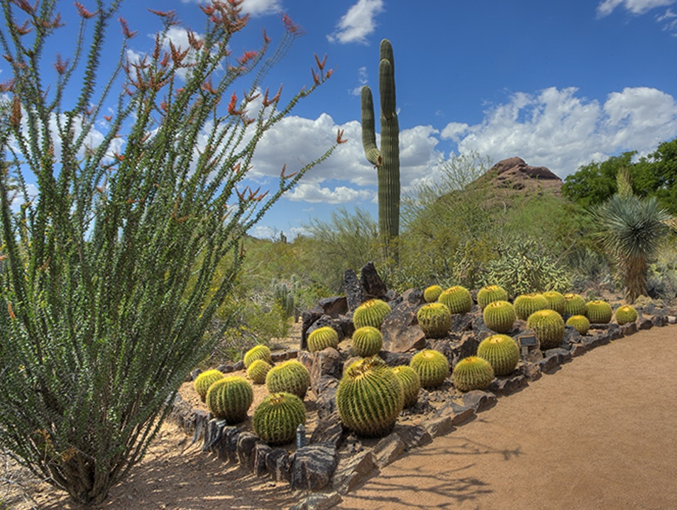 Desert Blooms in Phoenix Phoenix Arizona United States