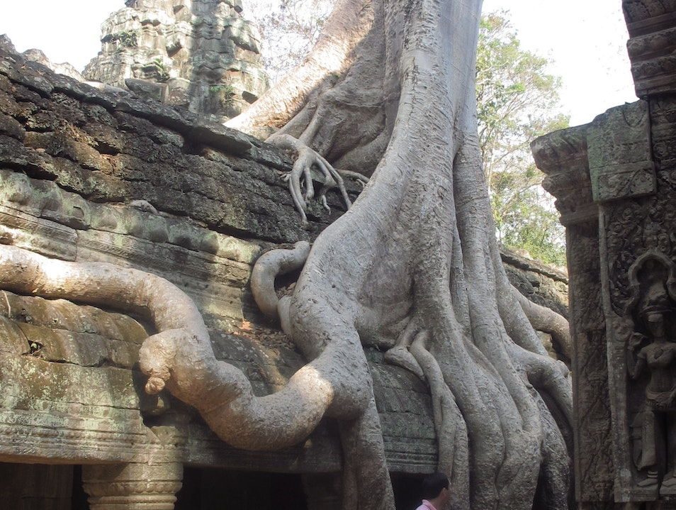 The trees take over at Ta Prom Siem Reap  Cambodia