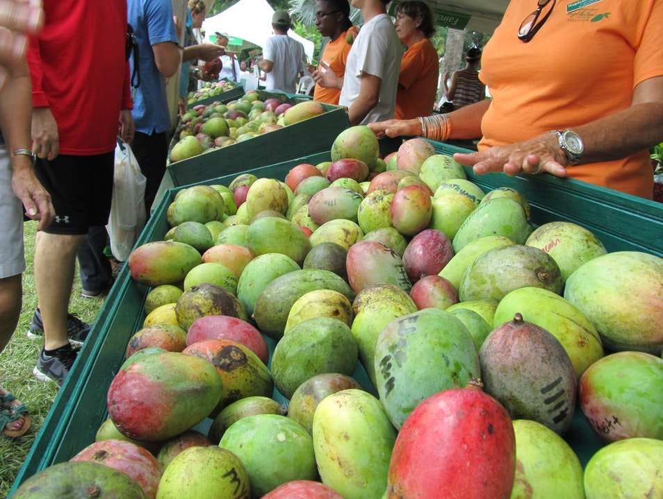 Fairchild's Annual Mango Festival Coral Gables Florida United States