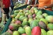 Fairchild's Annual Mango Festival