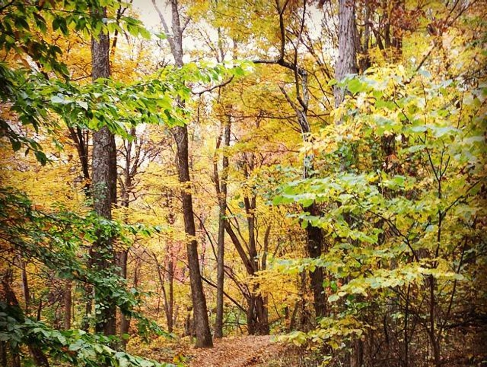 Beautiful Fall Hiking In Brown County State Park Nashville Indiana United States