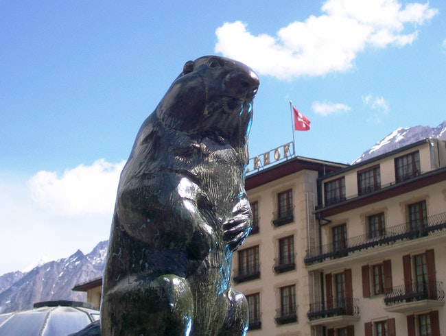 Marmot King of Zermatt