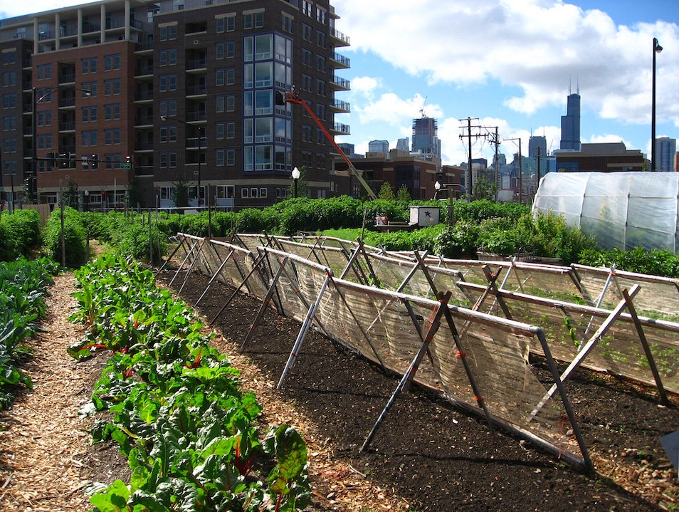 City Farm of Chicago