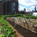 City Farm Chicago Illinois United States