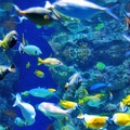 Tianjin Haichang Polar Ocean World Tianjin  China