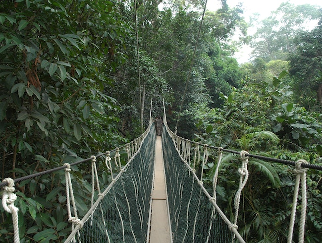 World's Longest Canopy Walk