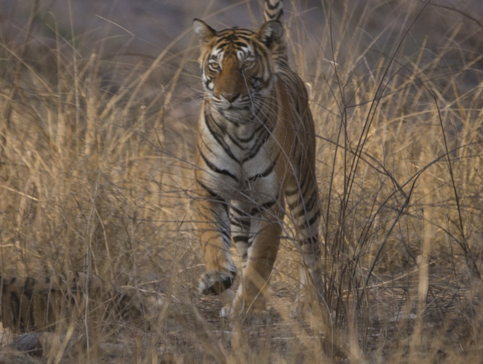 Ranthambore National Park–Tiger Safari Qila Ranthambor  India