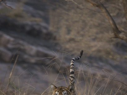 Ranthambore National Park Qila Ranthambor  India