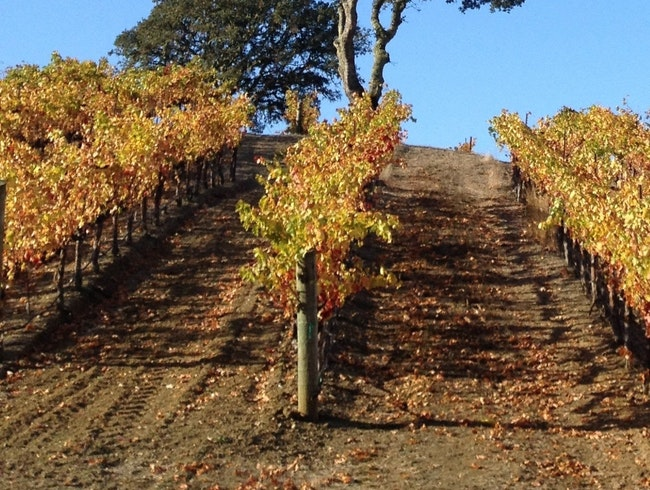 Chauffeured Wine-Tasting in Sonoma