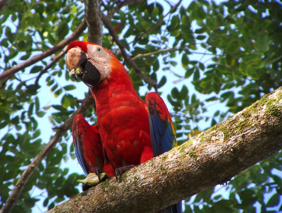 Bird Watching Tour at Carara National Park, Costa Rica. Quepos  Costa Rica