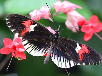 The Butterfly Farm Noord  Aruba