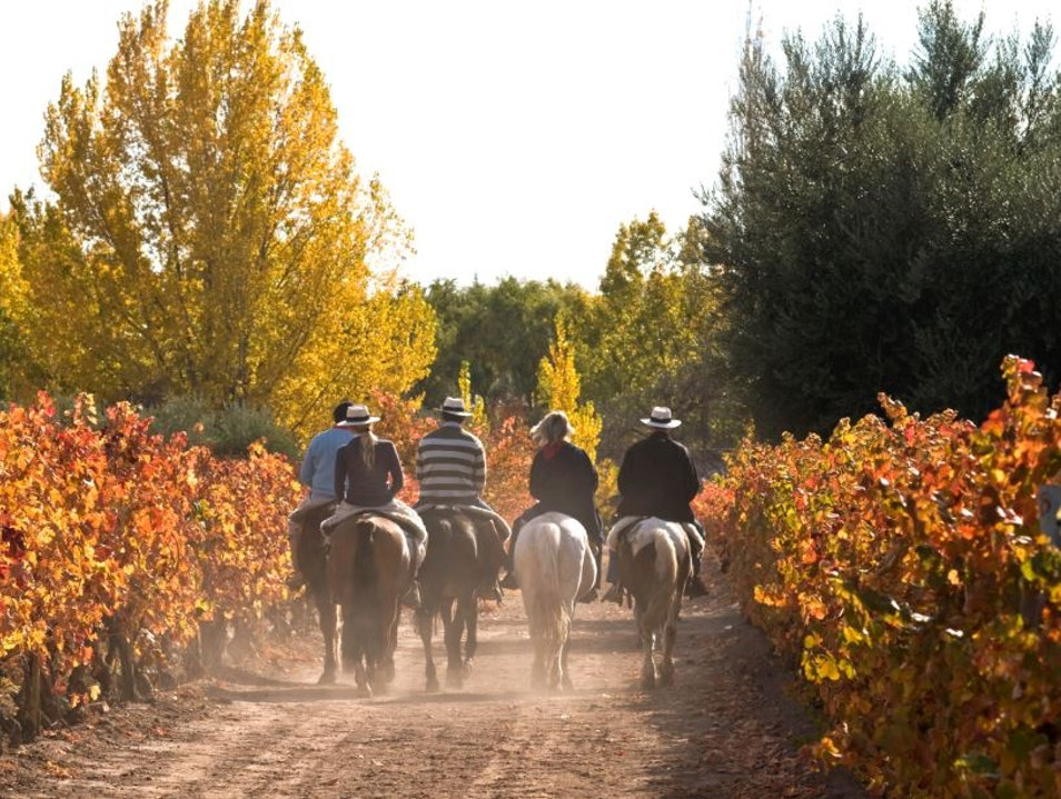 Wine Tours on Horseback  Luján de Cuyo  Argentina