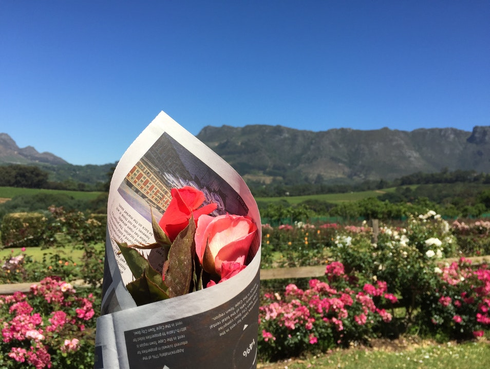 Dine Among the Roses at Chart Farm Cape Town  South Africa