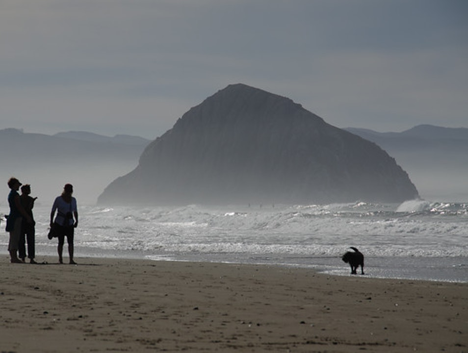 A Beautiful (& Dog Friendly) Beach on the Central Coast Morro Bay California United States