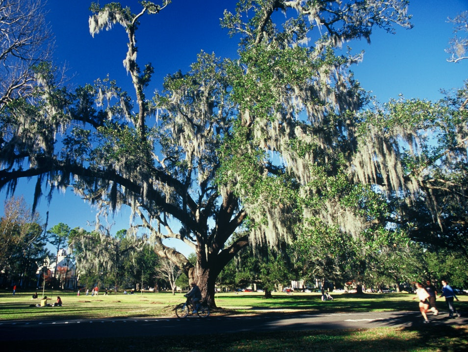 Stroll Around Audubon Park New Orleans Louisiana United States