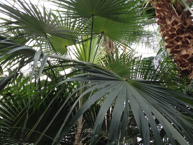 A Dome of Palm Trees