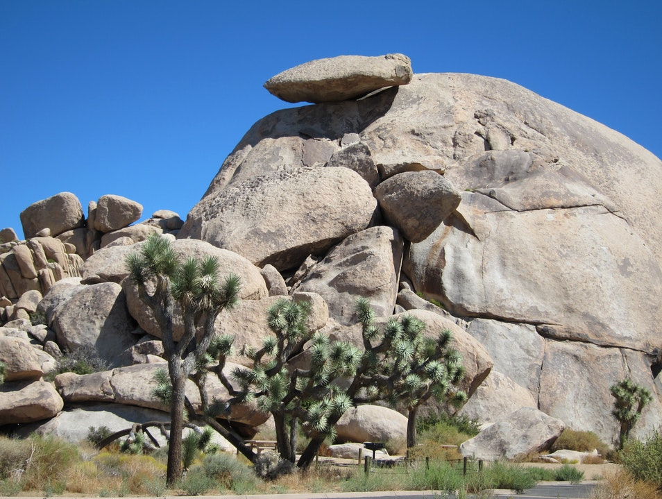 Cap Rock, Joshua Tree  Joshua Tree National Park California United States