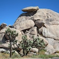 Joshua Tree National Park Joshua Tree National Park California United States