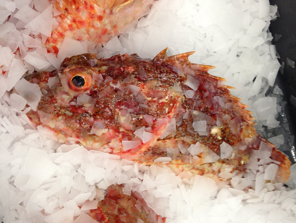Freshest fish in the Southern Hemisphere?