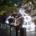 Waterfall Garden Seattle Washington United States