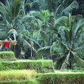 Discover the Remote Wonders of Bali Denpasar  Indonesia