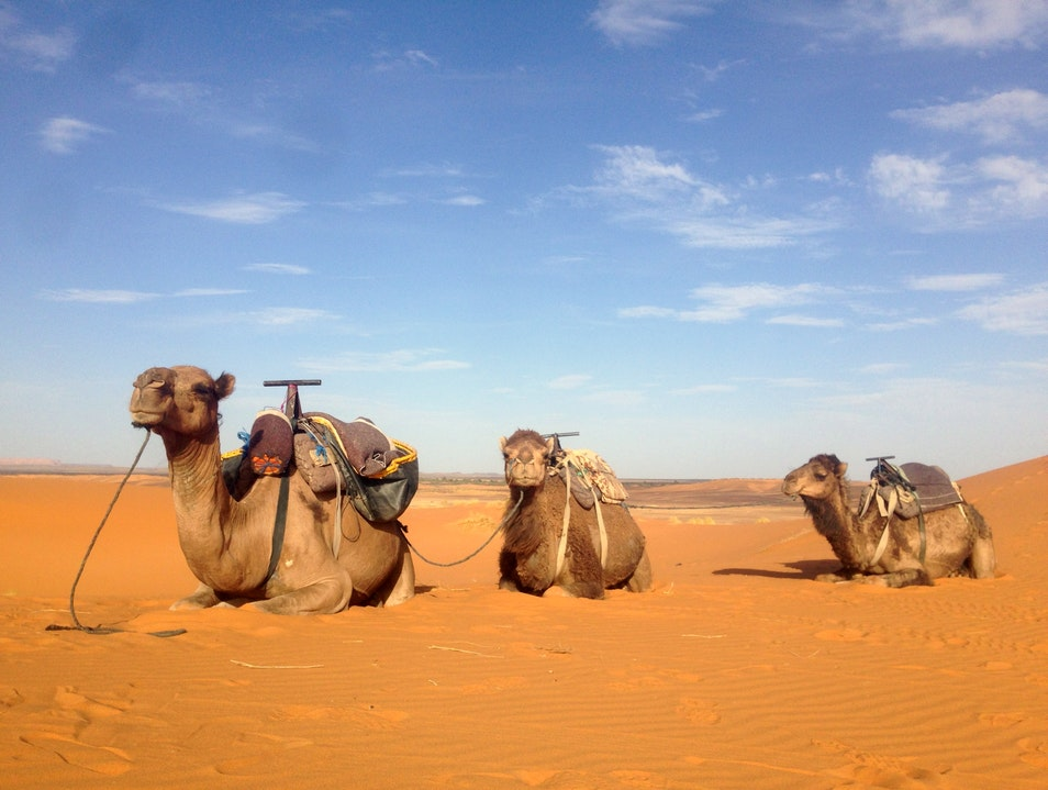 Morocco Tours The Best Tours in Morocco From Fes Marrakech Casablanca And Tangiers Ksar Tanamouste  Morocco