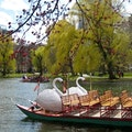 Public Garden Boston Massachusetts United States