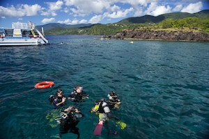 Dive Into the Cousteau Reserve