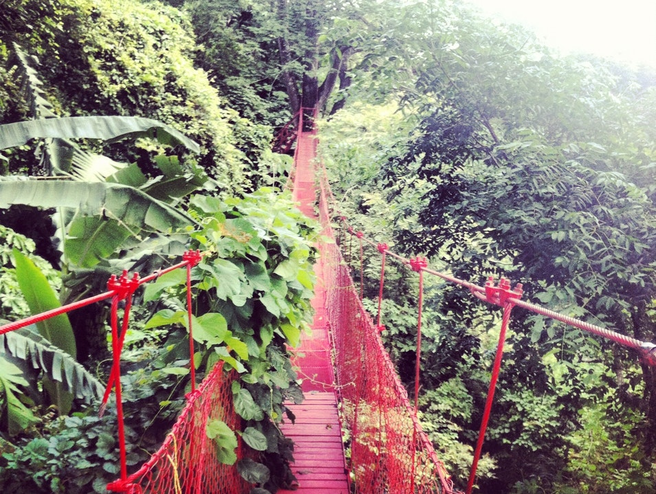 Get Lost in the Red Treehouse