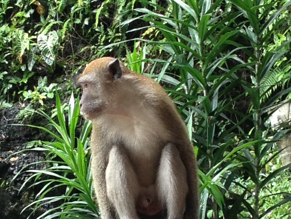 Ancient Temples and Modern Monkeys