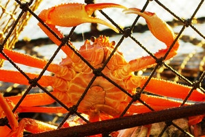 Bering Sea Crab Fishermen's Tour