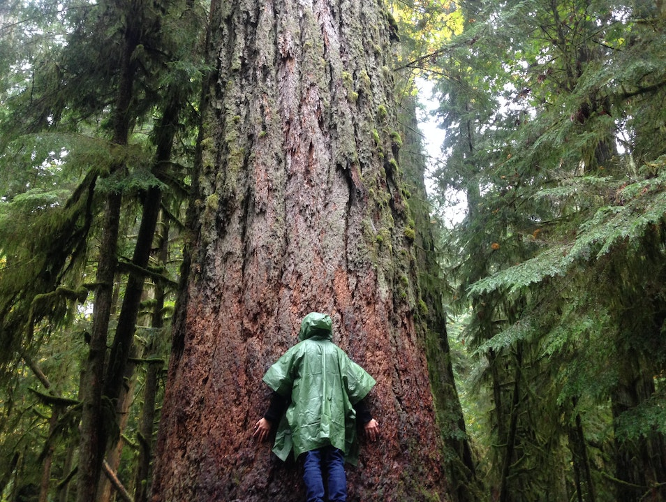 Hugging Giants on Vancouver Island