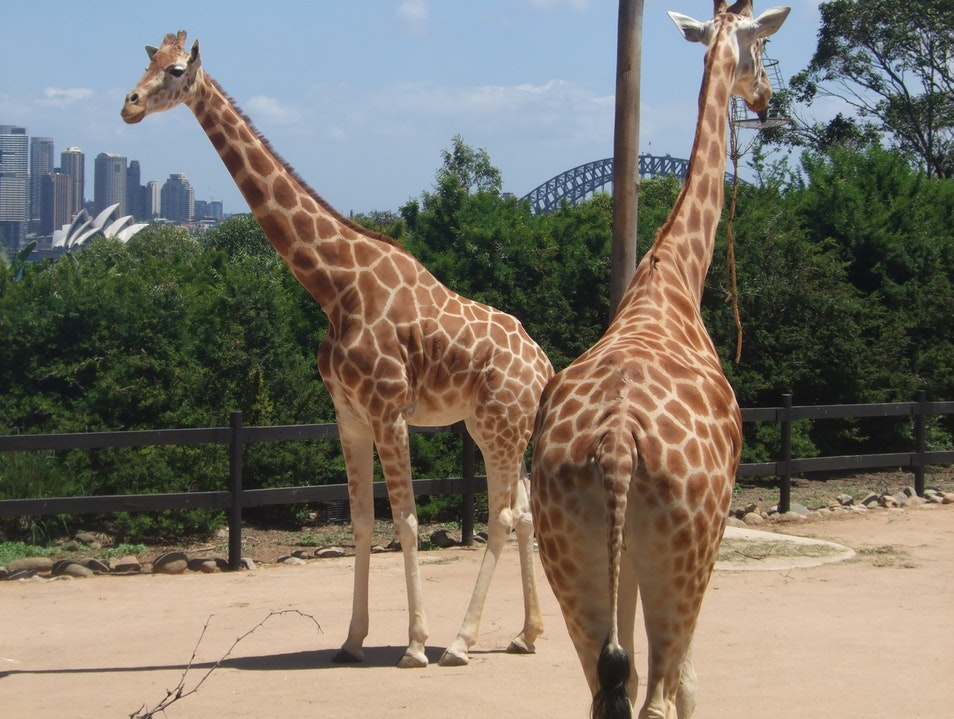 The Wonder of Taronga Sydney  Australia