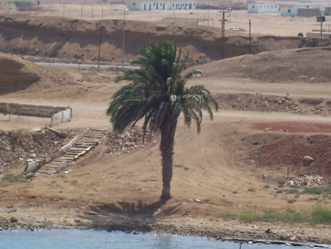 Single Palm on the Suez Canal