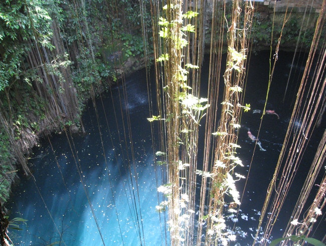 Lush Swimming Hole
