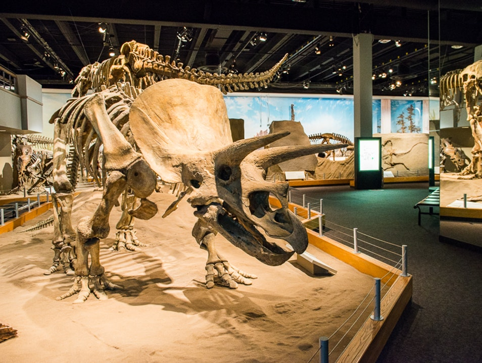 Hands-On Dino History Drumheller  Canada