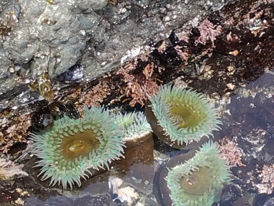 Tide-pool discoveries in morning, dinner tonight! Sea Ranch California United States