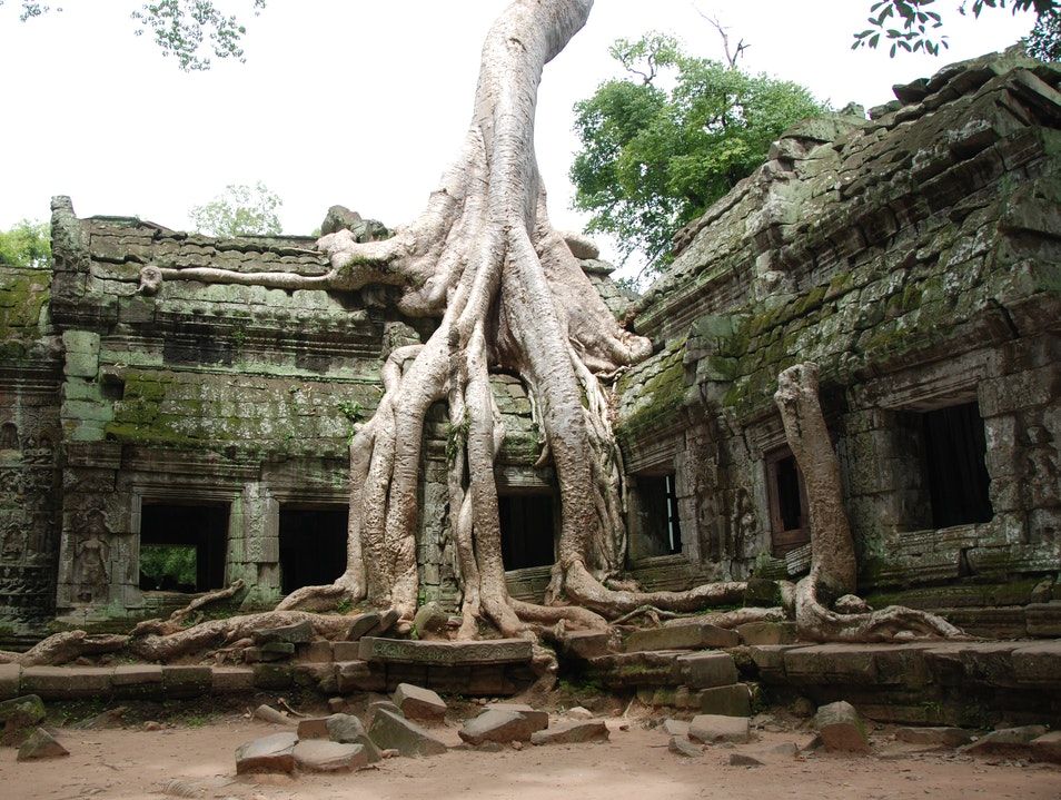 Reclaiming an Ancient City Angkor  Cambodia