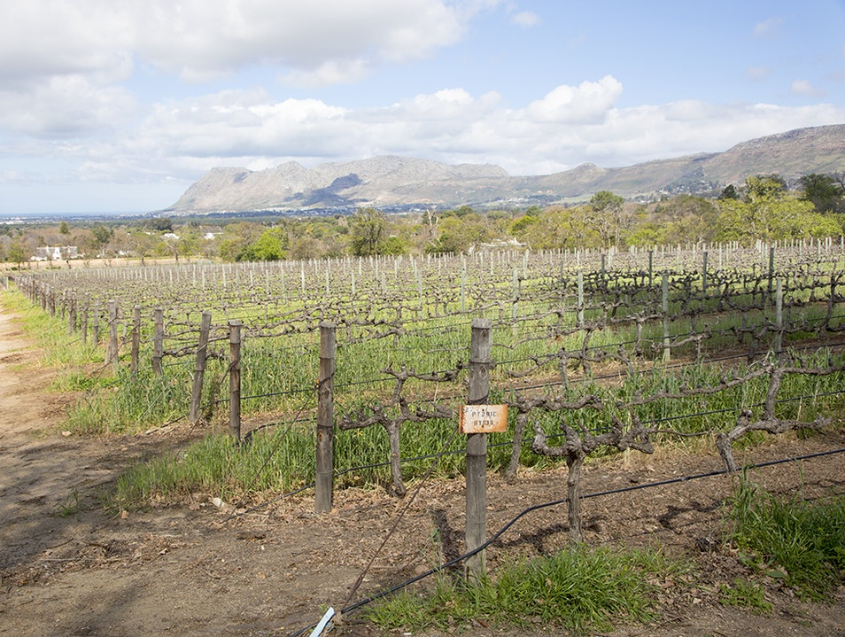 South Africa's Oldest Winery: Groot Constantia Cape Town  South Africa