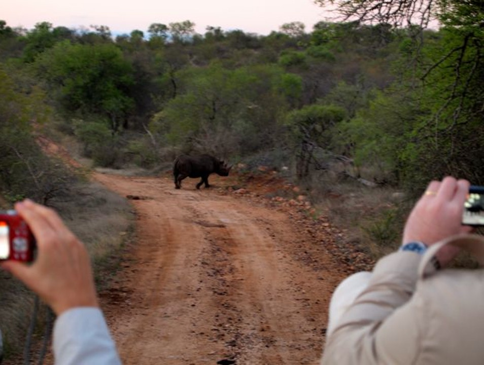 Rhino Spotting on Safari York Nature Reserve  South Africa