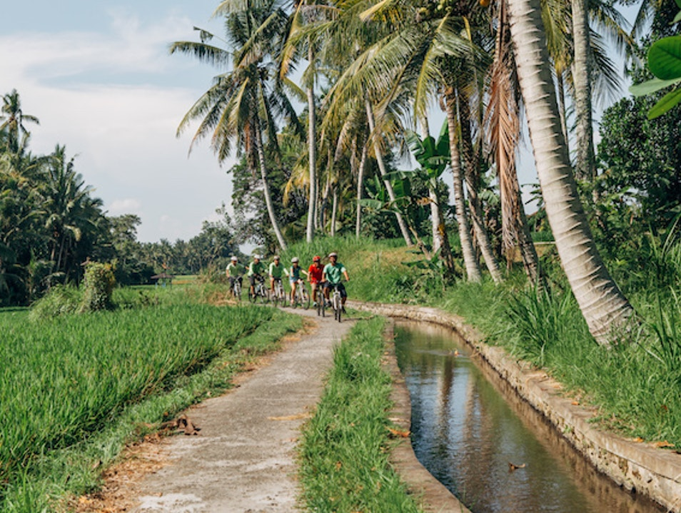 Banyan Tree Bike Tours Ubud  Indonesia