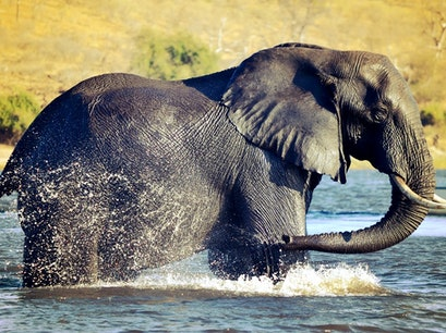 Chobe National Park Kasane  Botswana