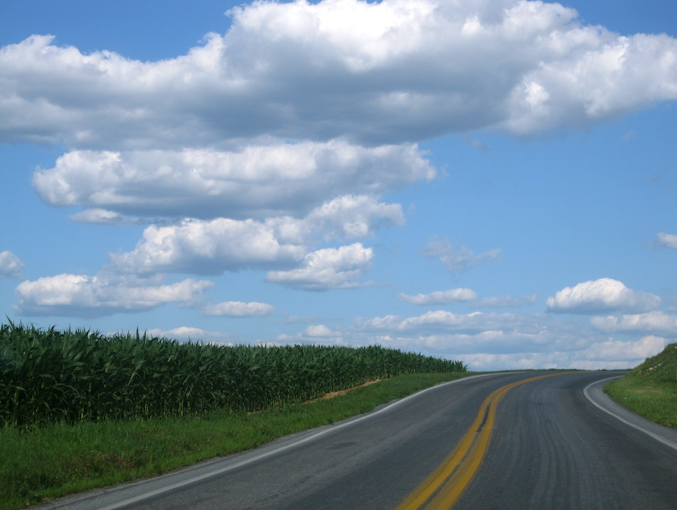 Amish Buggies and Corn Fields