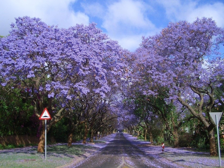 Purple Highlights to the Streets of Johannesburg Johannesburg  South Africa