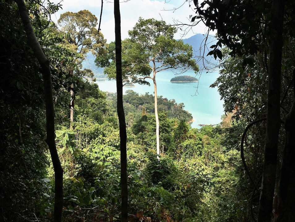 Go on a hike in the lush Rainforest