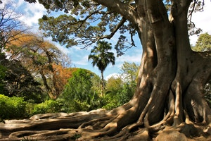 The Most Beautiful Green Spaces in Cape Town