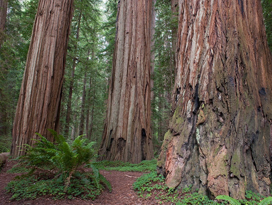 Tall Trees Grove California California United States
